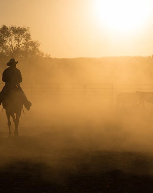 Cattle Mustering, Home Valley Station, North Western Australia