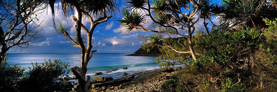 Rainforest, Noosa, Queensland Australia