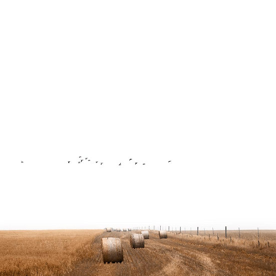 Hay bales and a flock of birds, South Western Australia