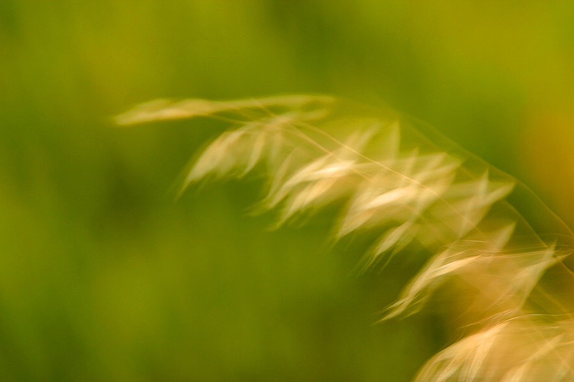 Plant, blowing in the wind