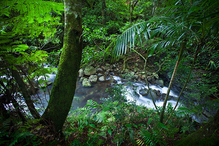 River, Lamington National Park, Queensland, Australia