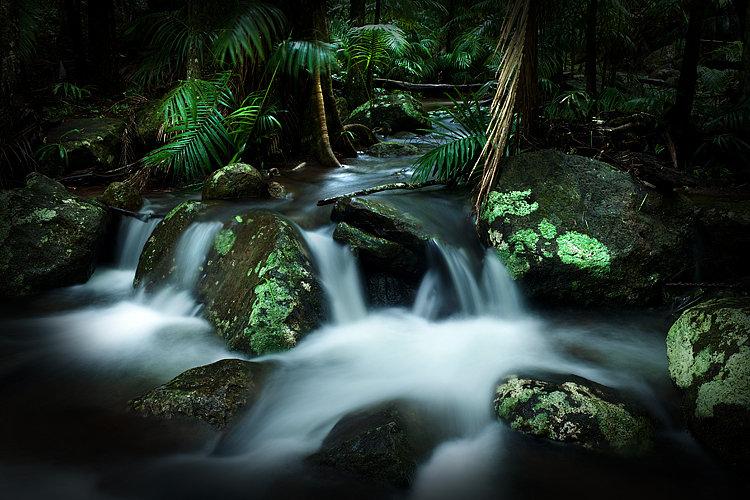 Creek, Tamborine National Park, Queensland Australia