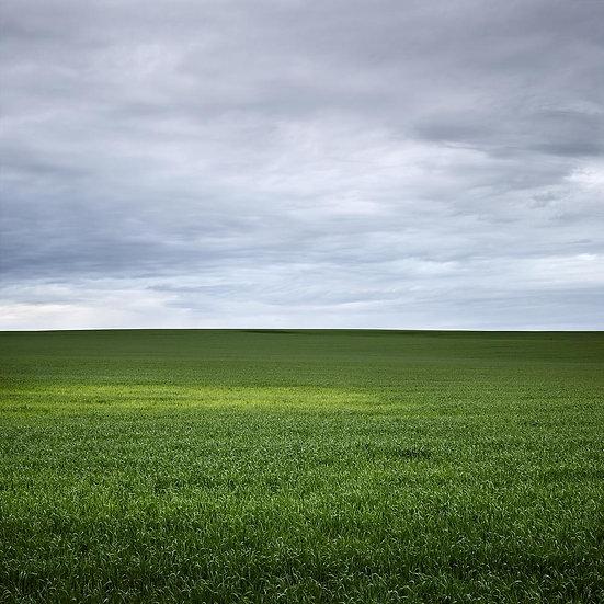 Green grasses on Albany farmland, South Coast,  Western Australia