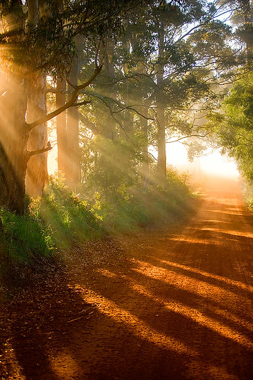 Sun rays through the forest trees