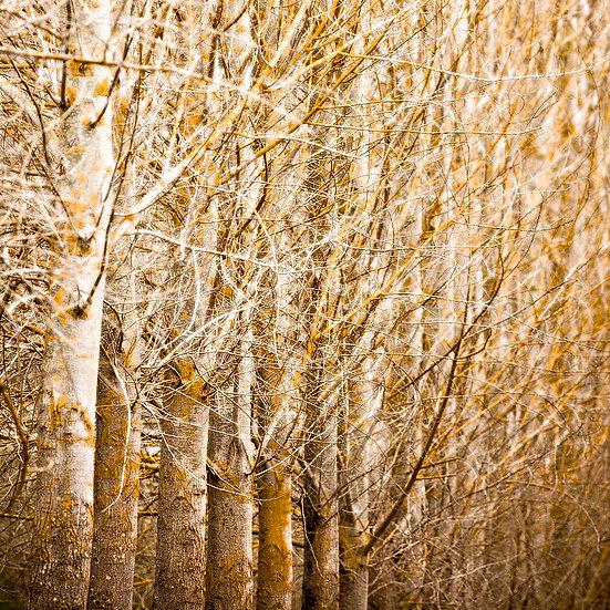 Trees, Nannup, South Western Australia