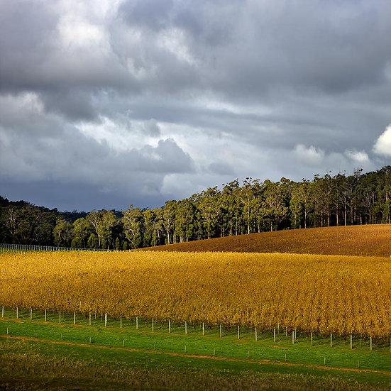Vineyard, Forest, Pemberton, South Western Australia