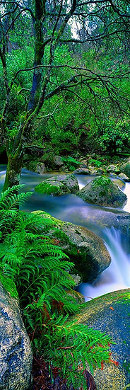 Waterfall and Forest, Mount Buffalo, Victoria, Australia