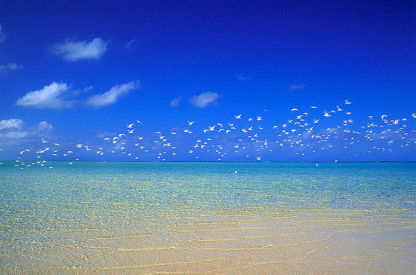 Flock of birds over the ocean, Ningaloo, North Western Australia