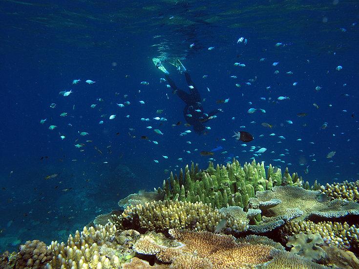 Coral Mind Trip