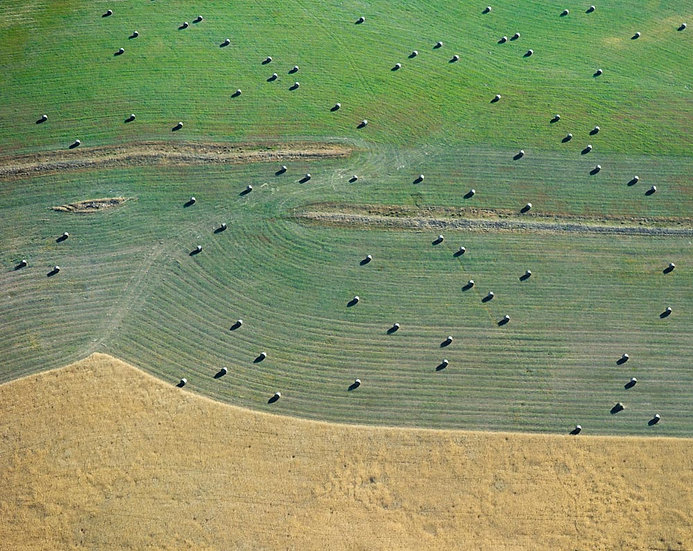 Aerial view of hay bales, harvest