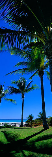 Tropical Cable Beach, Broome, Kimberley, North Western Australia