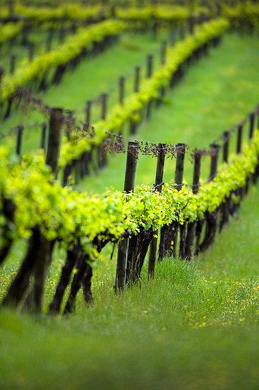 Winery, South Western Australia