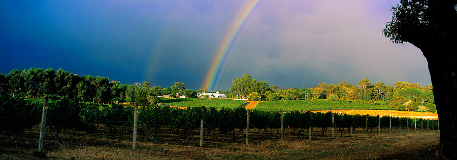 Grape vines and rainbow, Hay Shed Hill Winery, South Western Australia