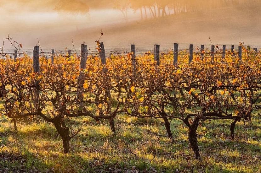 Vineyard South Western Australia