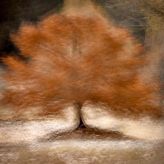 Autumn Tree, Balingup Western Australia