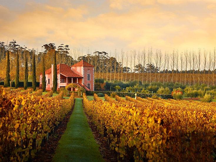 Vineyard, Picardy Winery, Pemberton, South Western Australia