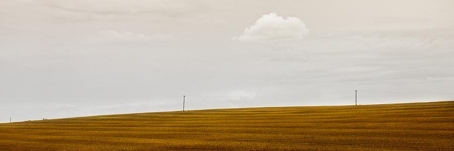 Rolling hills on farm land with electricity poles, Esperance, Western Australia