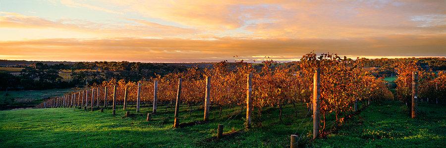 Vineyard, Wilyabrup, South Western Australia