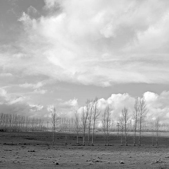 Trees and farmland , South Western Australia