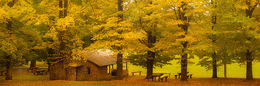 Autumn Trees Victoria,  Australia