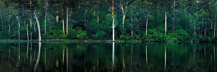 Karri Valley Reflections, Pemberton Western Australia