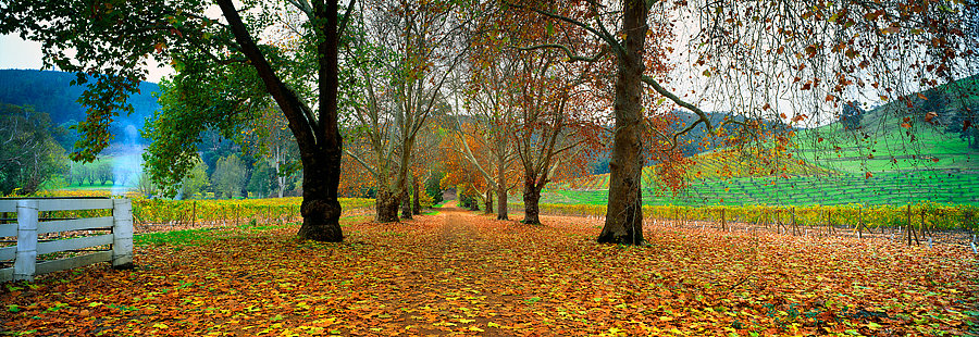Autumn, farm road, Nannup, South Western Australia