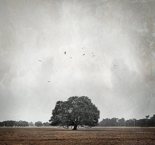 Tree and birds.