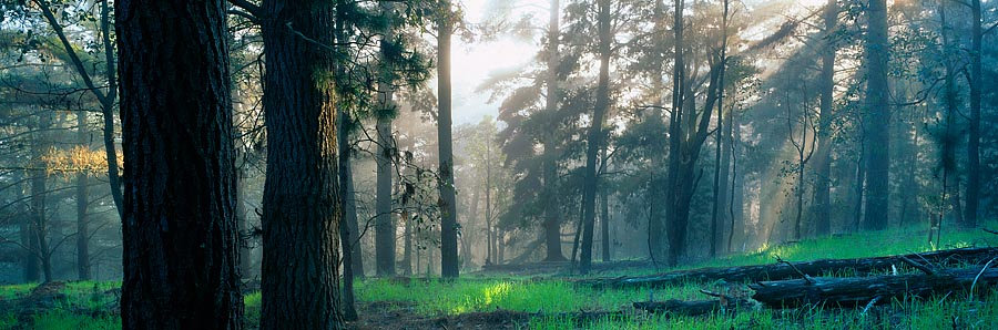 Morning fog and rays of sunshine in the forest, Nannup, South Western Australia