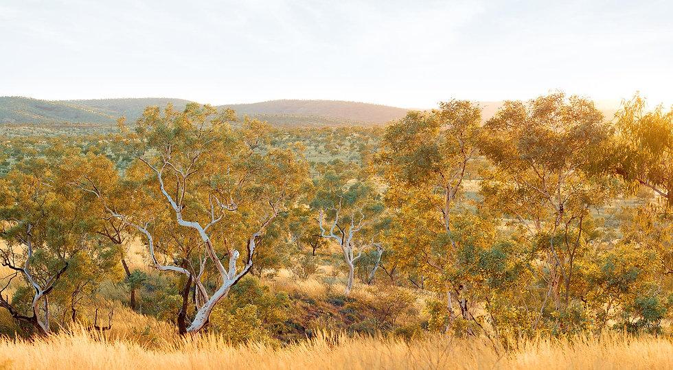 Bush, Karijini, North Western Australia