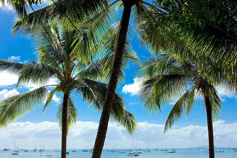 Palm trees and boats, Airlie Beach, Queensland, North Eastern Australia