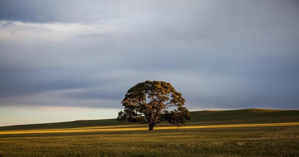 Farmland, South Australia