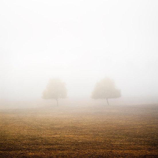 Fog, Bridgetown, South Western Australia