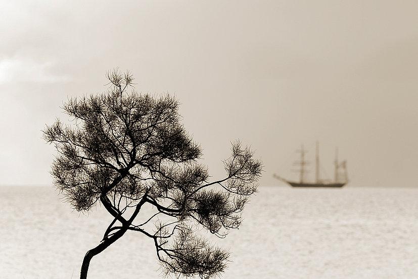 Leeuwin Sailing Ship