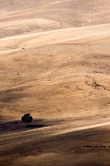 Pasture farm lands, South Australia