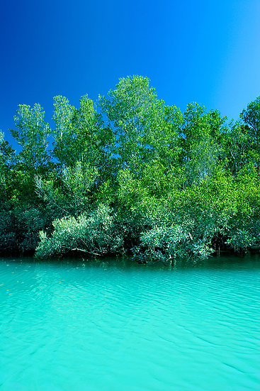 Mangroves, Willie Creek, Broome, Kimberley, North Western Australia