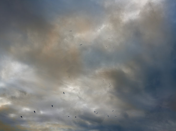 Birds. Storm Clouds