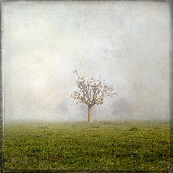 Treed Farmland in the Morning Fog