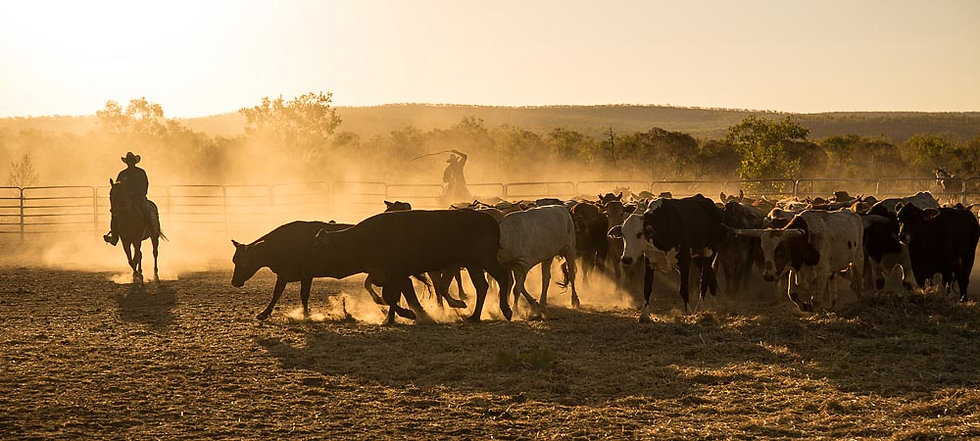 Cattle Station Austalia