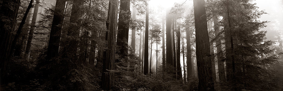 Redwood National Park, California, United States of America