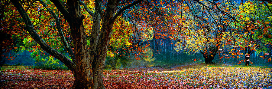 Autumn colours at Lake Bogong, Victoria, Australia