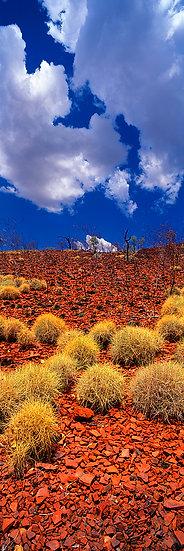 Spinifex, Karijini National Park, Pilbara, North Western Australia