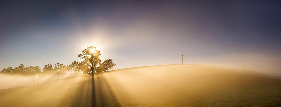 Morning sunrise and fog on farmland