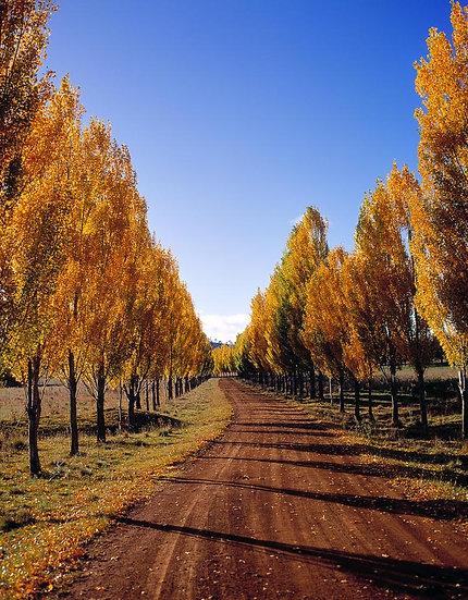Glen Innes in autumn, NSW, Australia