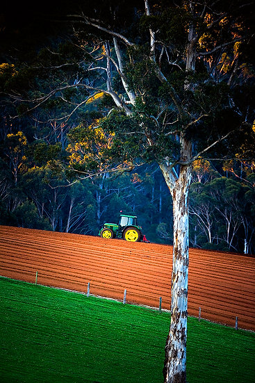 Tractor, Jarrah Jacks Winery, Pemberton, South Western Australia
