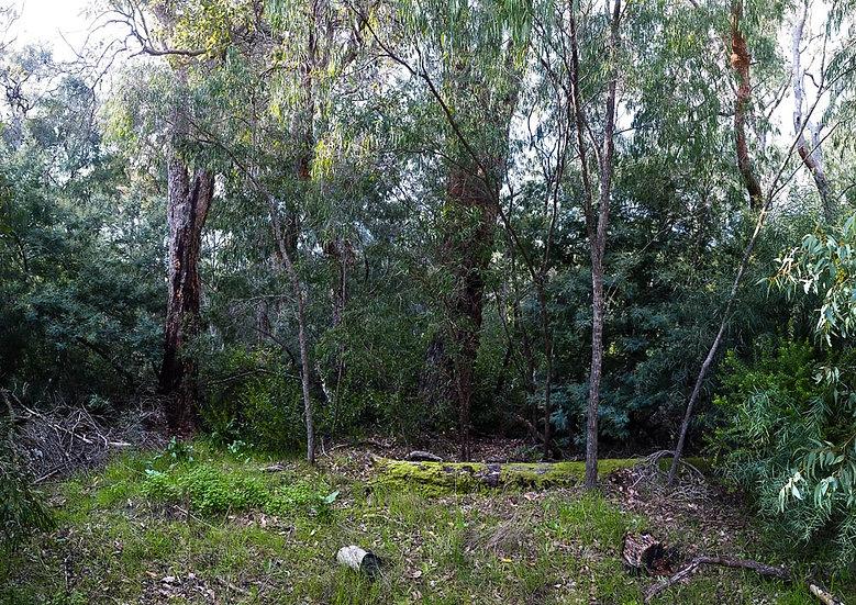Bushland Forest,  Busselton, South Western Australia