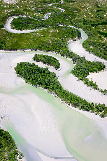Mangrove mud flats,  Willie Creek, Broome, Kimberley, North Western Australia
