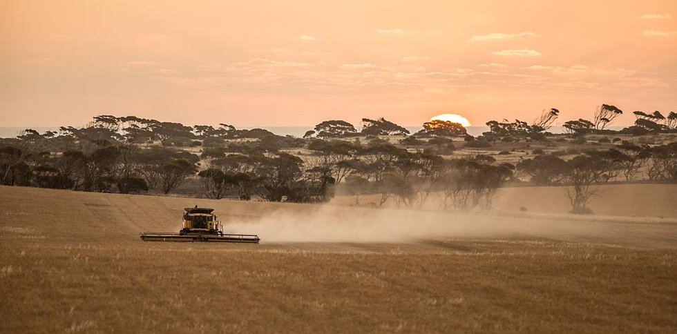 Harvesting crops, South Australia