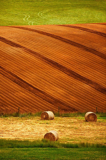 Hay Bales and Crops, Pemberton, South Western Australia