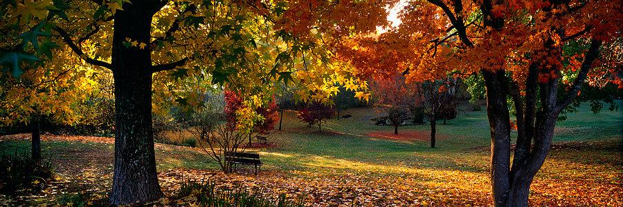 Autumn colours at the Park in Bright, Victoria, Australia