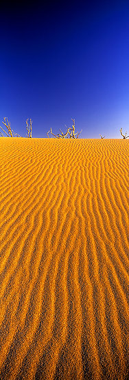 Injidup Beach Dunes, South Western Australia